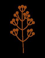 Branch 3