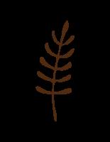 Branch 4